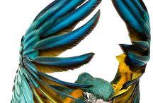 R.R.R Wings