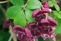 FOOD-Edible Flowers