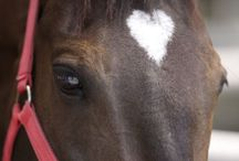 Be my Valentine / by Abler Equine Pharmaceutical