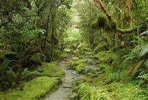 New Zealand - Where I grew up - Aotearoa