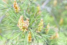 luonnon kasvit