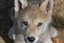 Save The Wolfs