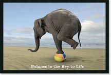 YippYBall / You've never seen this type of life balance before...100% guaranteed!