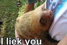 Sloths / S  L  O  W sloths