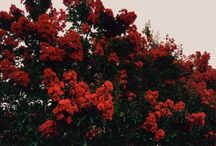 цветочки.