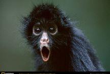 Primates / I just love a monkey...