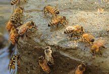 More Pollinators