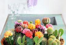 Z - I love plants! / Paisagismo Garden Design Landscape