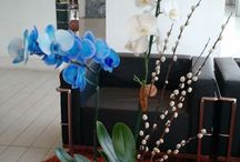 Assinaturas de orquídeas / Orquídeas standard, plus e master. Assinatura mensal e quinzenal.