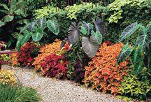 Colour and ideas for the garden