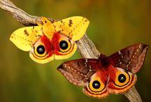 butterfly / by Tammy McCutchen