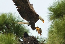 Flight Animals