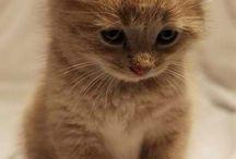 amori di gatto