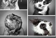 Photography - dogs