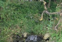 Natuur / De NATUUR ontdekken in de wildste tuin van Nederland