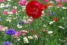 wildflower.tracy porter.poetic wanderlust / ..........~ live your poetic wanderlust~ xx tracy porter