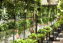 Plants dekor
