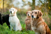Animals: they bring me joy / by Christina Linnell {Linnell Media}