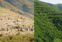 Forest/Reforestation