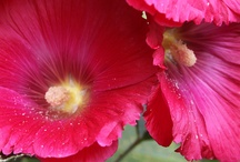 Rocío flores 2  / Rocío flores 2  / by jose alonso