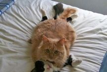 I Love Cats! / by Carol Parcell