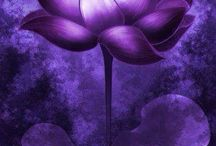 Lavendel/ Purple