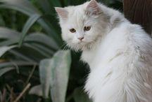 Animals ++ Pets / by Kimberly Rivera