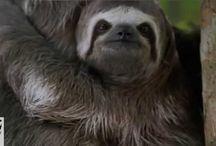 Giornata Oasi 2014 / La Giornata delle Oasi quest'anno è dedicata alla tutela dell'Oasi del mondo: l'Amazzonia http://bit.ly/MissioneAmazzonia