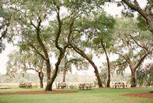 Oaks / by lauren shackelford