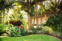 sub tropical garden design