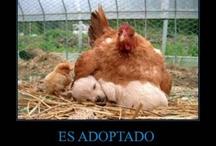amak/mothers