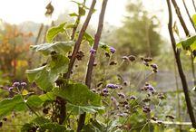 Garden trellis'