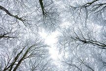 foto drzewa