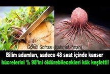 karahindiba kansere