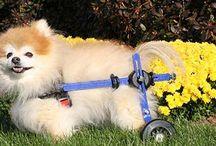 Dog Wheelchairs / Dogs on wheels! #walkinwheels #dogwheelchair #dogslife #handicappedpets