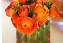 Really Pretty Flowers /
