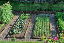 Vegetable Gardening / Growing your own vegetables not only saves money, but allows you to know EXACTLY where your food comes from and what has gone into the soil etc. Here's some pics for inspiration. Enjoy.