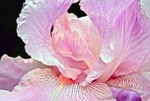Shades of Orchid