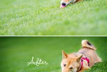 Before - After Photography