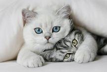 CAT LOVE / by Pam Seymour