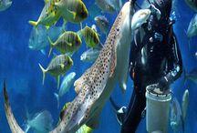 Aquarium / Aquarium promotion