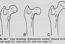 FemurTibiaFibula