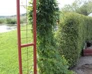 Portal trädgård