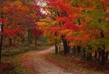 Autumn / by Nancy Fournier Niergarth
