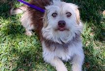 SPCA - Brazoria County