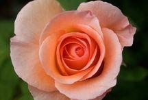 flower.pin