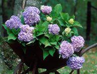 "♥ Cottage Flower gardens ♥ / ~ ""I don't make proper flower arrangements; mine just grow, like the garden"" ~ Tasha Tudor"