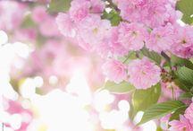 Un printemps avec NUXE