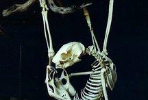 Skeletonz