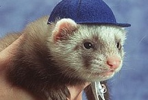 Ferrets in Hats / by Mary Step